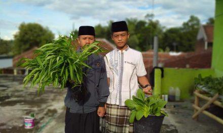 Tak Hanya Mengaji, Santri Al-Mukhtariyah Kini Sibuk Bertani Sayur